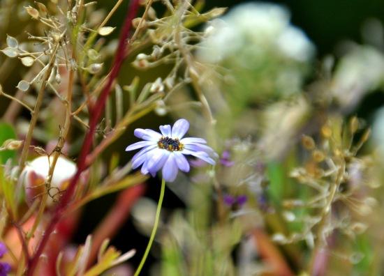 Blumen-Balkon-4