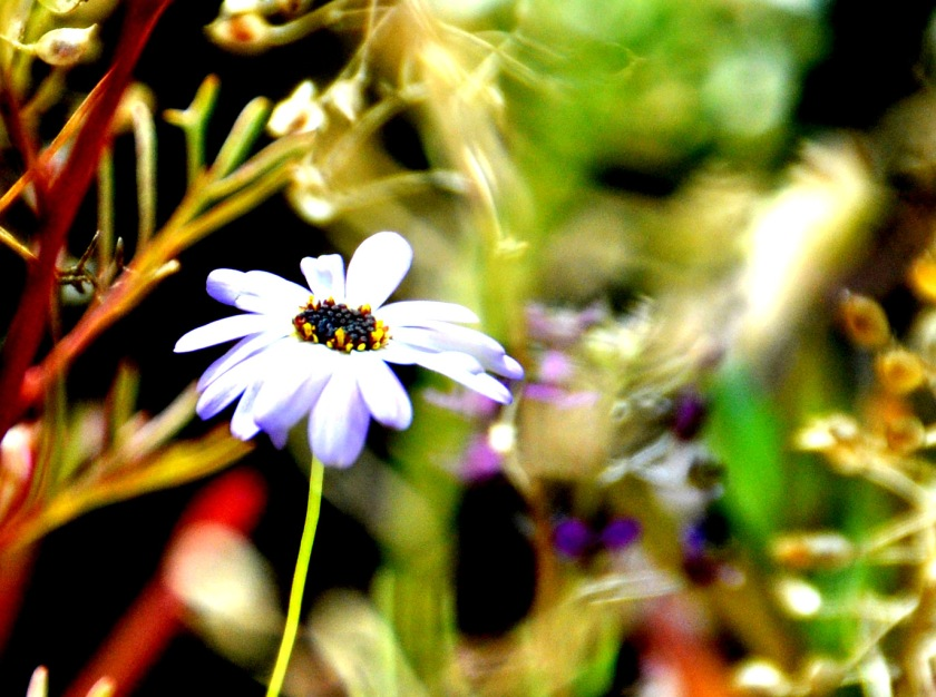 Der Herbst Ist Der Frühling Des Winters | Balkon Im Fruhling Blumen