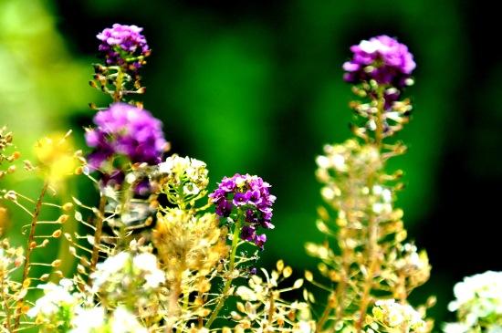 Blumen-Balkon-9