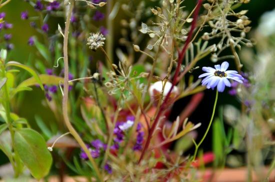 Blumen-Balkon