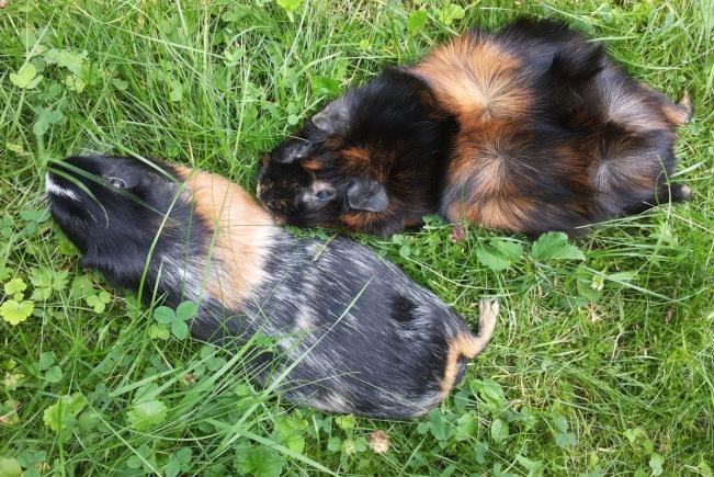 Millie und Ginni 2